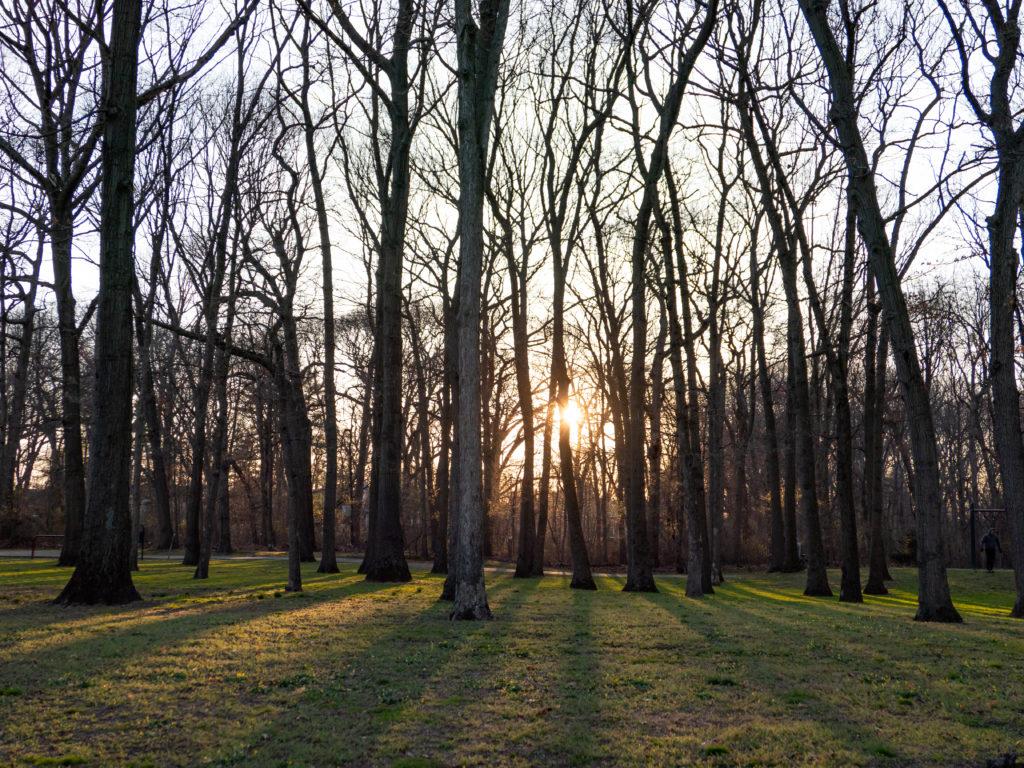 Madera de bosques sostenibles